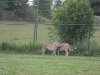 Āfrikas safari parks Hamiltonā