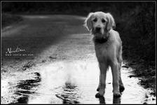 nadinaz suns